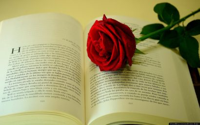 73163_rose_flower_drop_freshness_book_text_37096_2560x1600-2560x1600-c